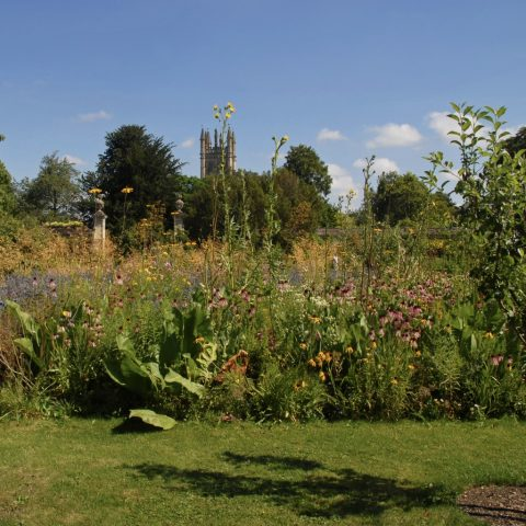 The Botanic Garden is the oldest in the UK with a range of activities