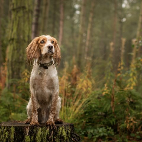 Bring your dog to stay with you at voco Oxford Thames
