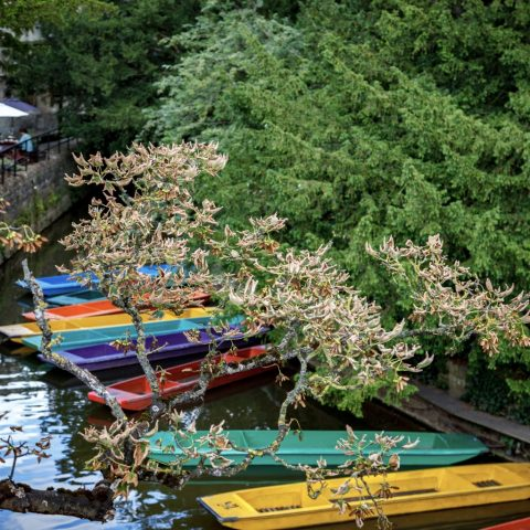 Ride along the river in Oxford and try some punting